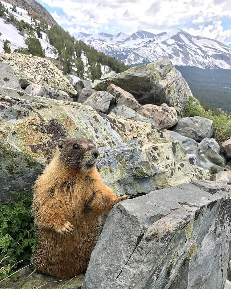 Curious marmot met on a hike in the Canadian Rockies