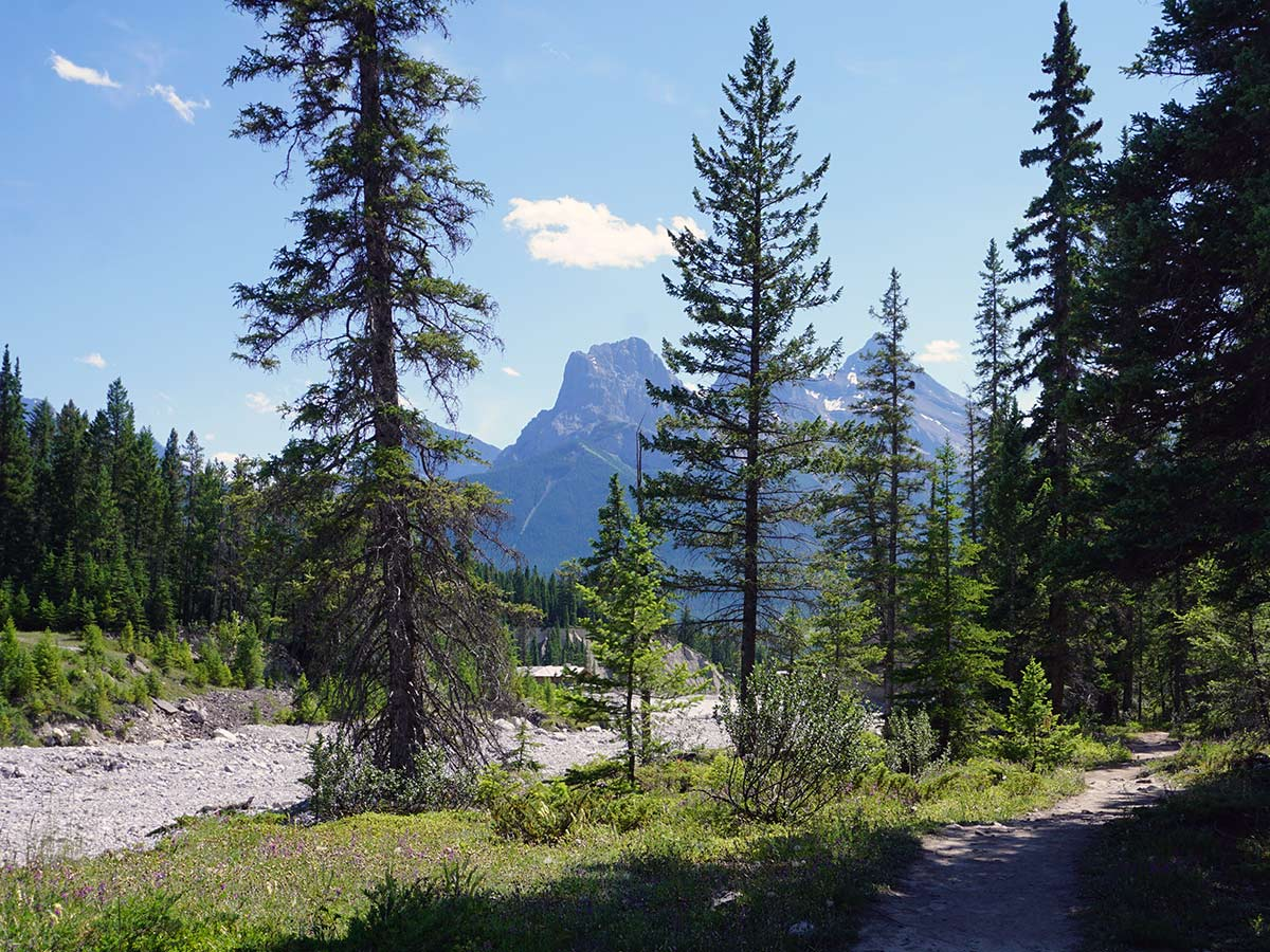 Cougar Creek on the Lady MacDonald Tea House Hike from Canmore, Alberta