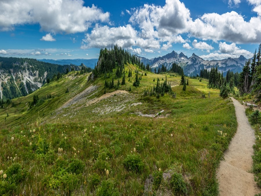 A hiking path meanders through the Cascades on the Pacific Crest Trail