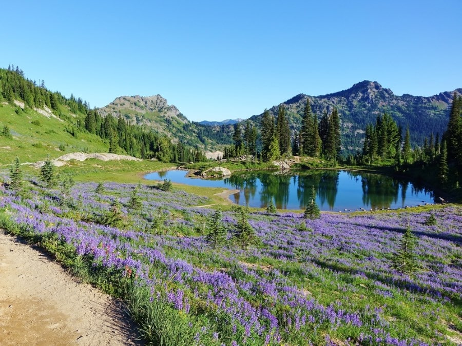 Field of wildflowers on the Pacific Crest Trail in Washington state