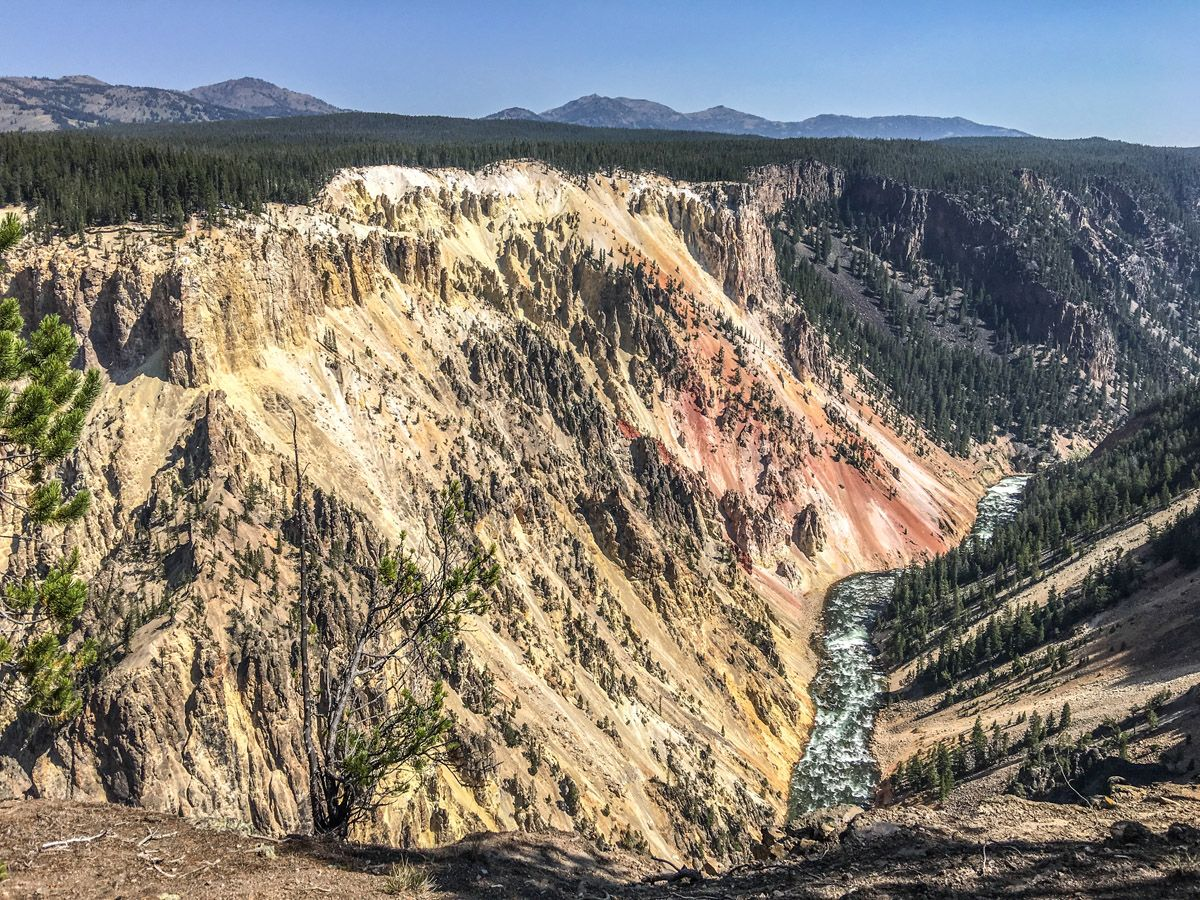Overview of the canyon from the Artist Point to Point Sublime hike in Yellowstone