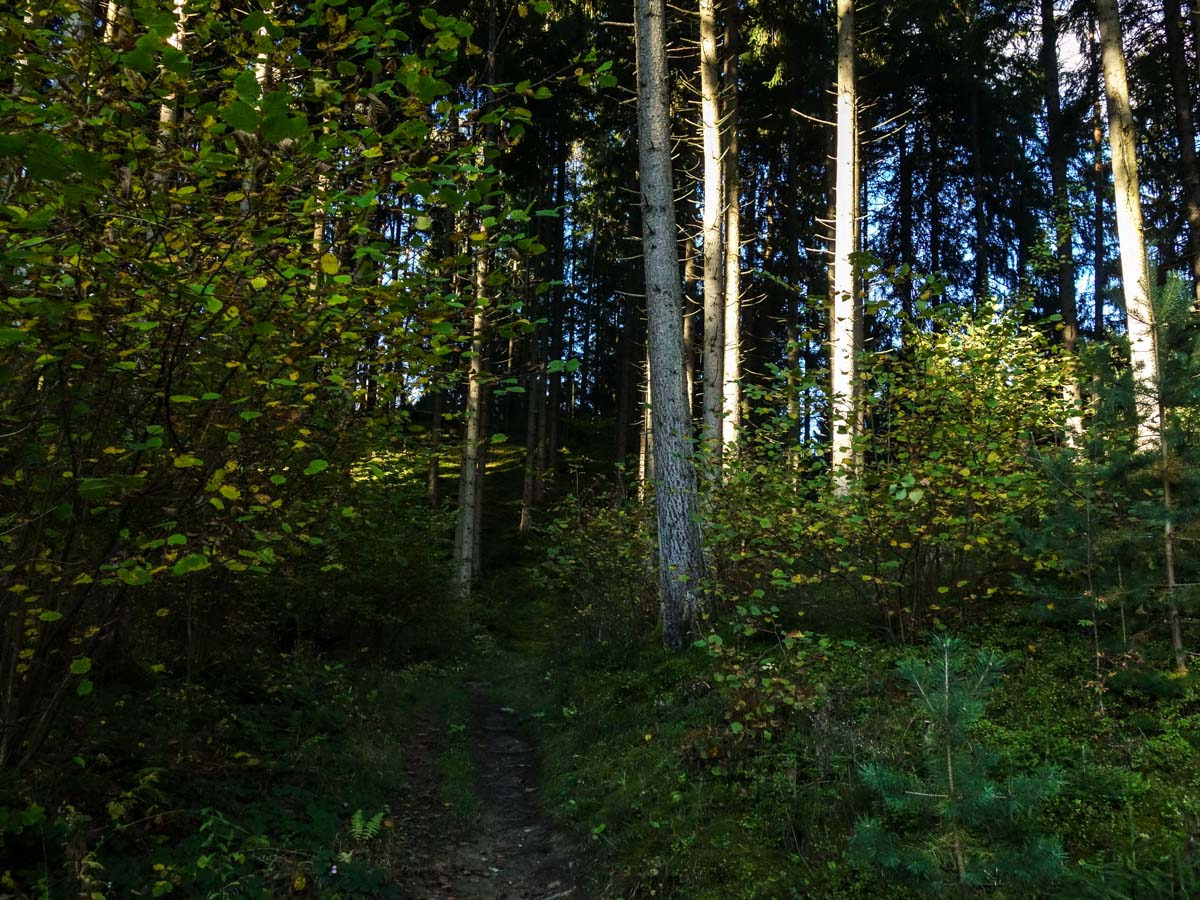 Trail in the forest on the Natterer See Hike from Innsbruck, Austria