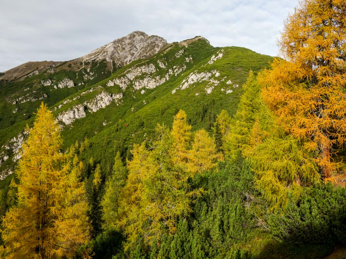 Colorful trees on the Reither Spitze Hike in Innsbruck, Austria