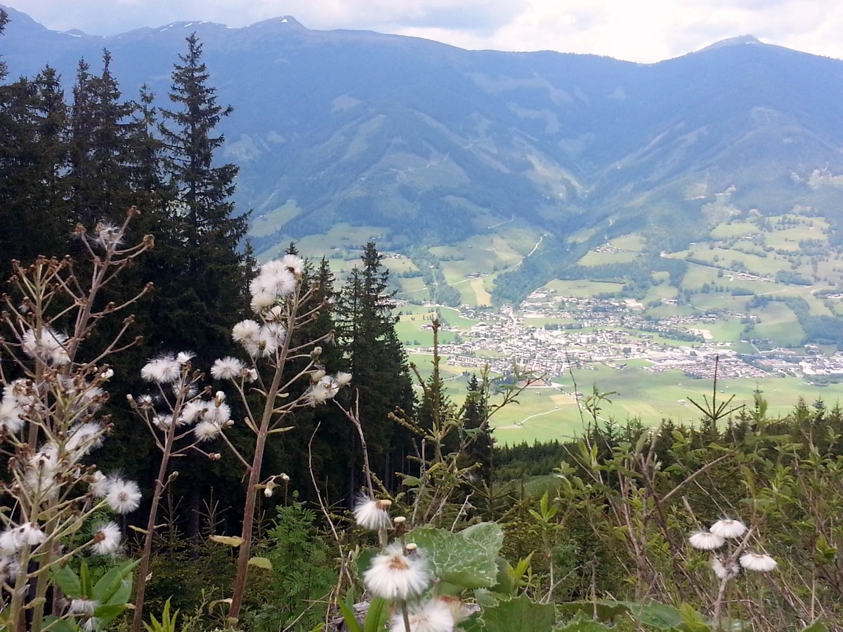 Woolgrass on the Maiskogel Forest Route Hike in Zell am See - Kaprun, Austria