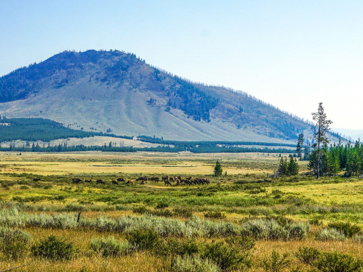 Hiking to Yellowstone's Bunsen Peak - My Yellowstone Park |Peak Hike Yellowstone