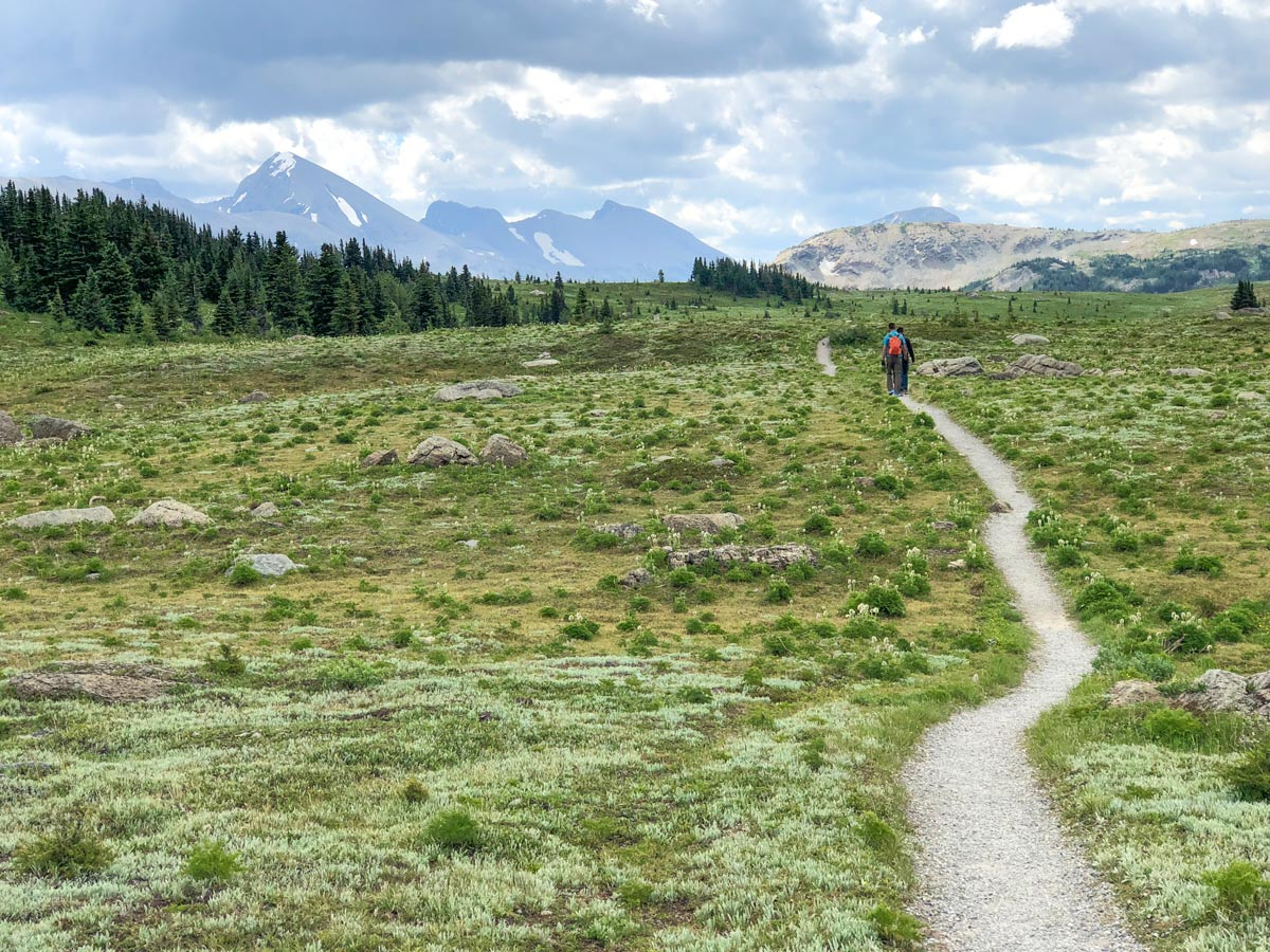 Expansive views on the Citadel Pass Hike in Banff National Park