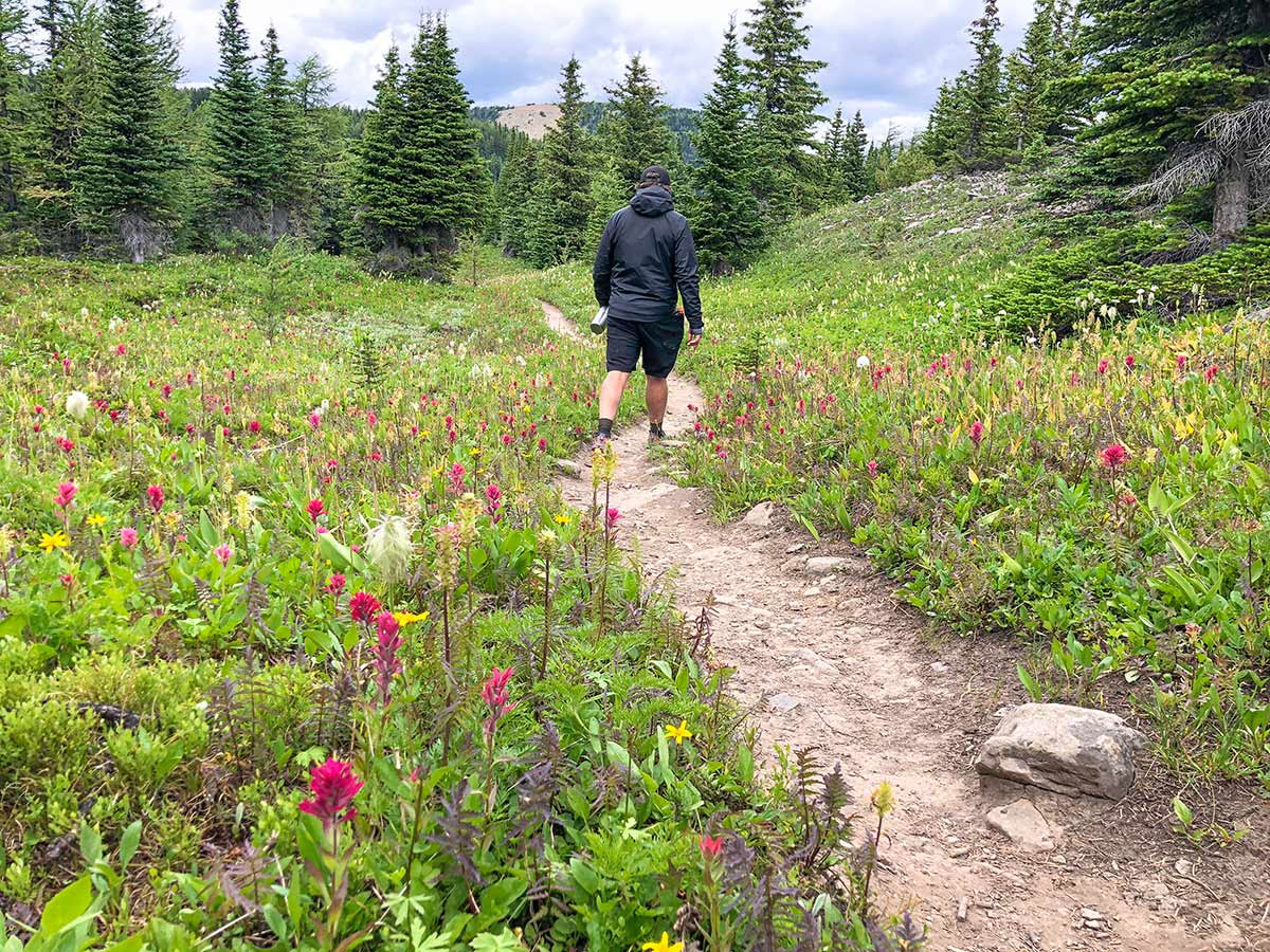Great walk on the Citadel Pass Hike in Banff National Park