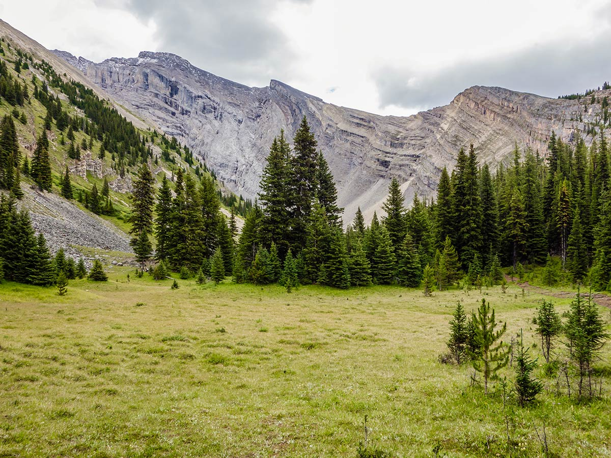 Small meadow on the Cascade Amphitheatre Hike near Banff, Alberta