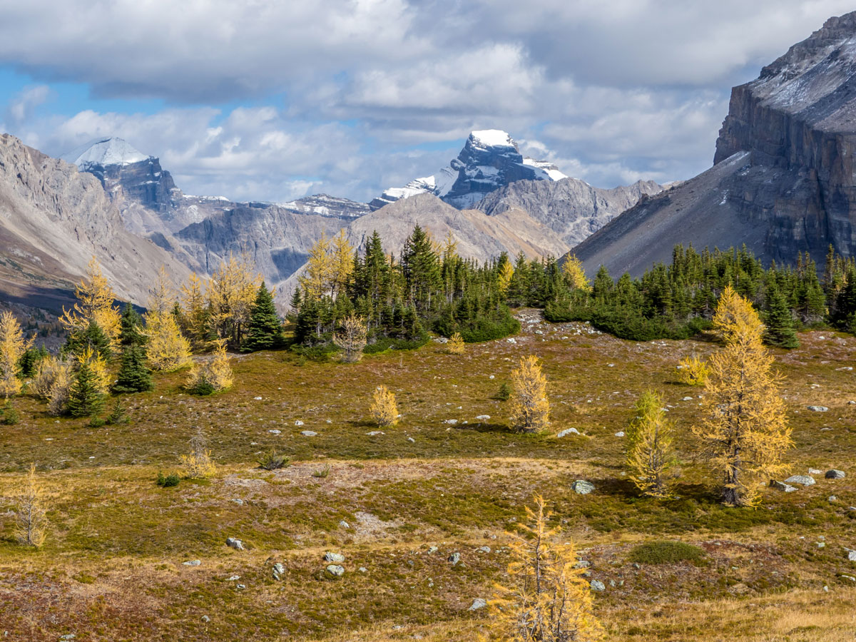 Larches changing on the way down from Mt Richardson on the Hidden Lake Hike from Lake Louise in Banff National Park