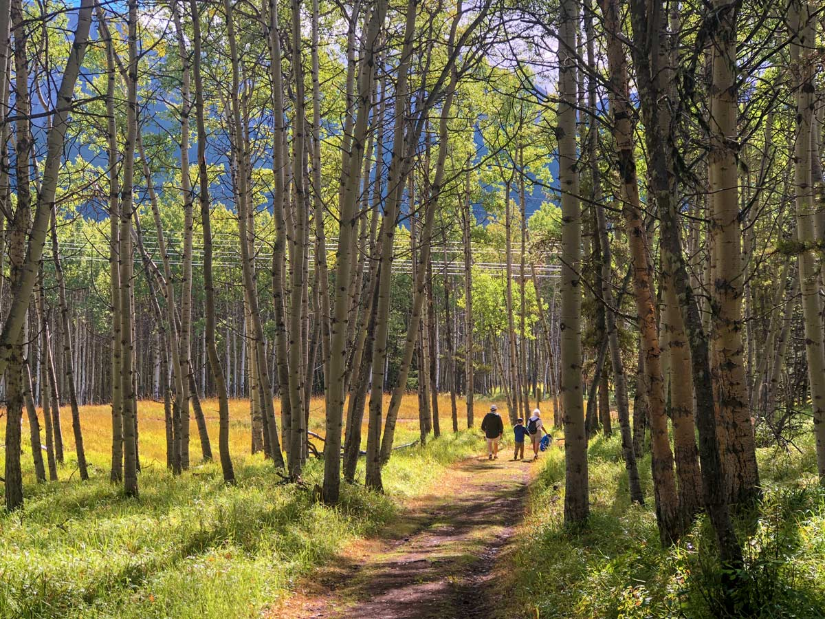 Walking down to the Kananaskis River and Hay Meadow on the Troll Falls Hike in Kananaskis, near Canmore