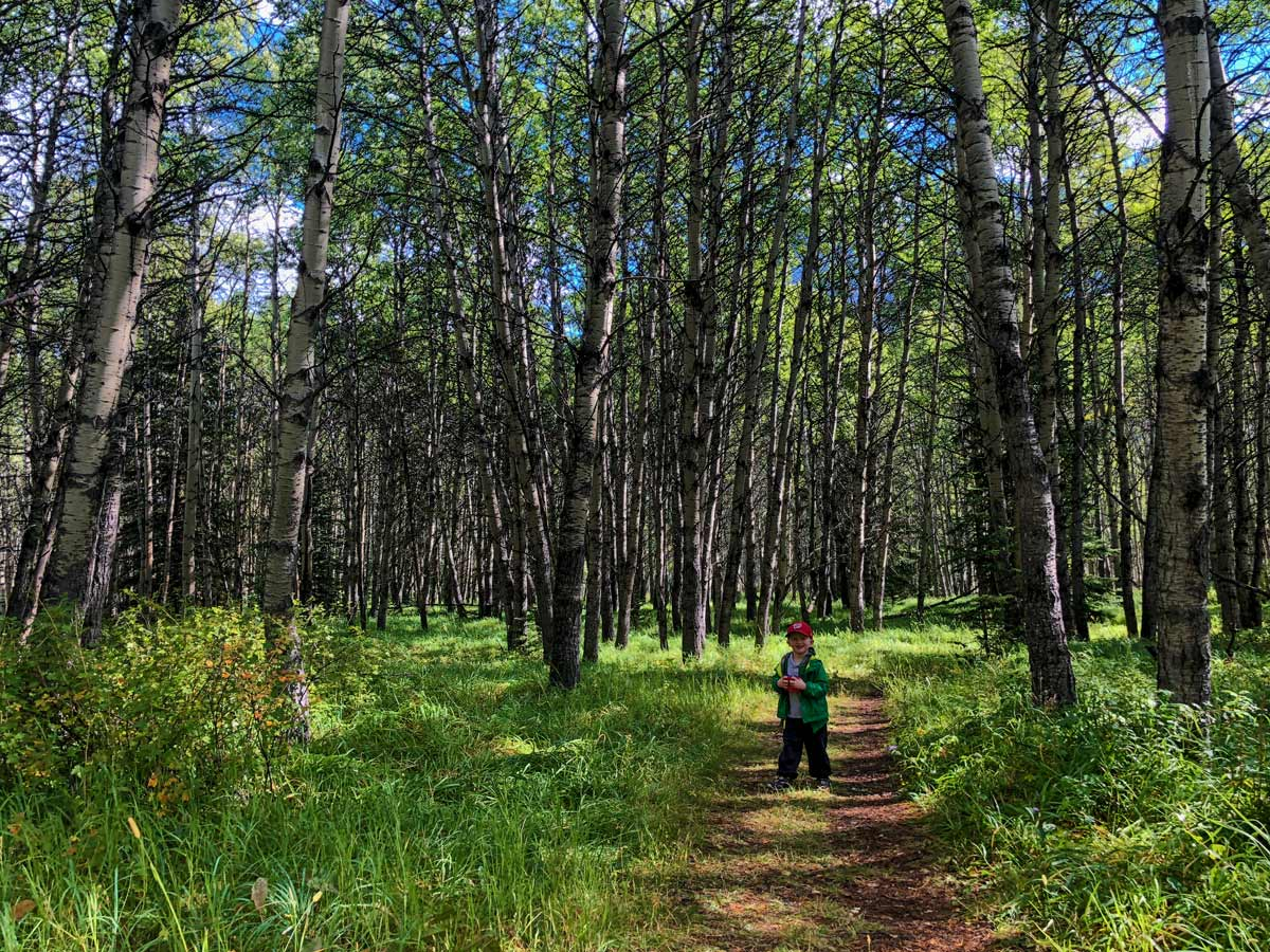 Kids-friendly trail on the Troll Falls Hike in Kananaskis, near Canmore