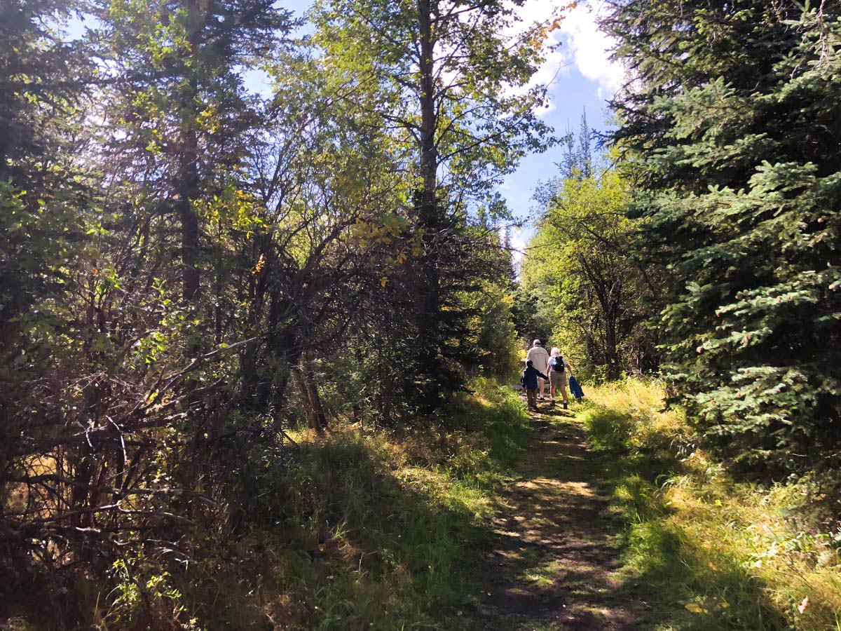 Trail to the Troll Falls Hike in Kananaskis, near Canmore