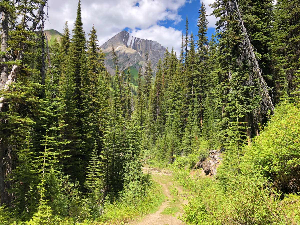 Trail through the forest on the Headwall Lakes Hike near Smith-Dorrien Trail in Kananaskis, near Canmore
