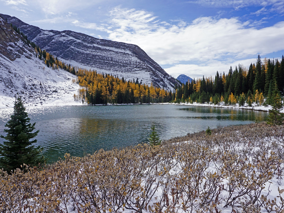 Larches surrounding the lake on the Rummel Lake Hike near Smith-Dorrien Trail in Kananaskis, near Canmore