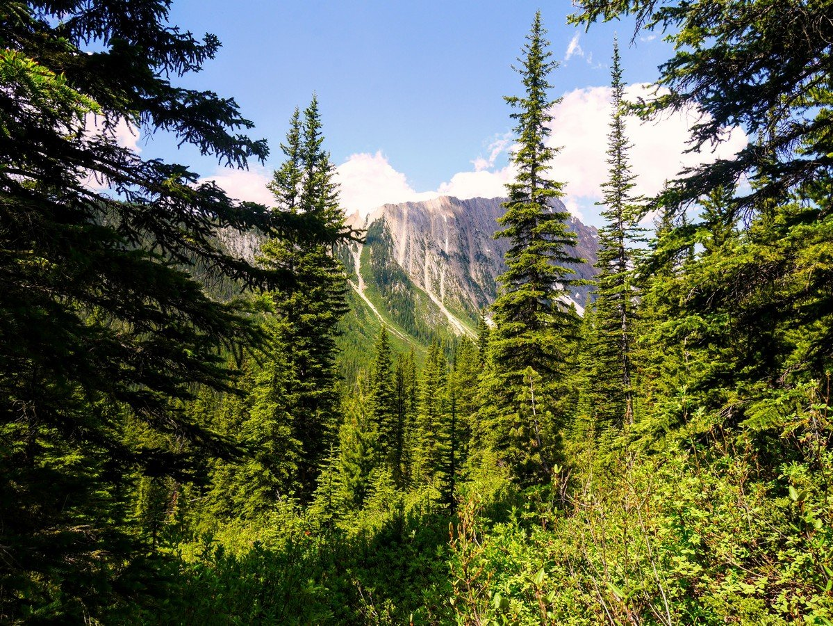 Mt Ogden view through trees on the Paget Lookout & Sherbrooke Lake Hike in Yoho National Park, Canada
