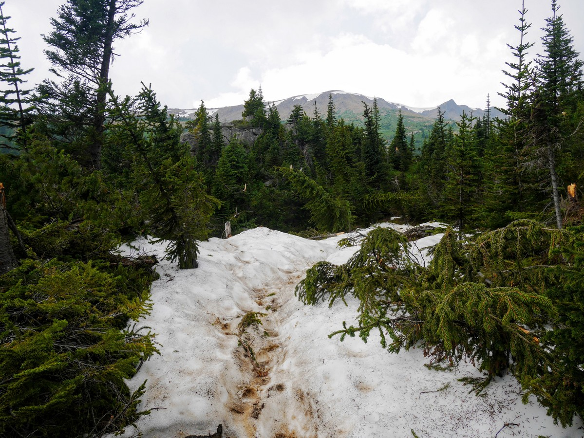 Avalanche path of the Hamilton Lake Hike in Yoho National Park, British Columbia