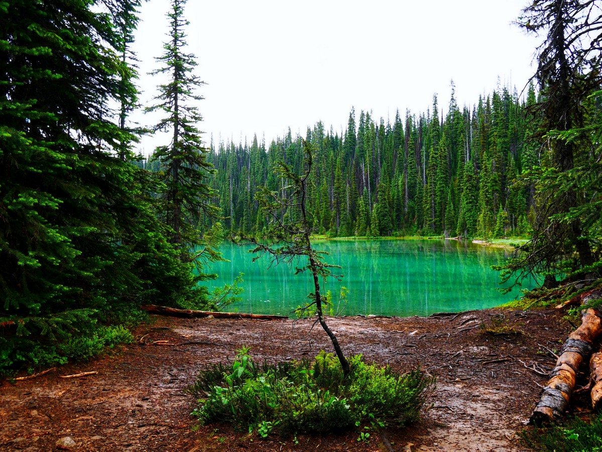 Kruppelholz by Yoho lake
