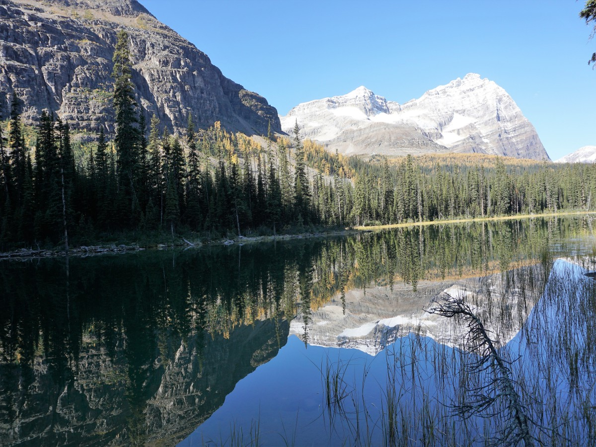 Morning views of the Lake O'Hara All Souls Route Hike in Yoho National Park, Canada