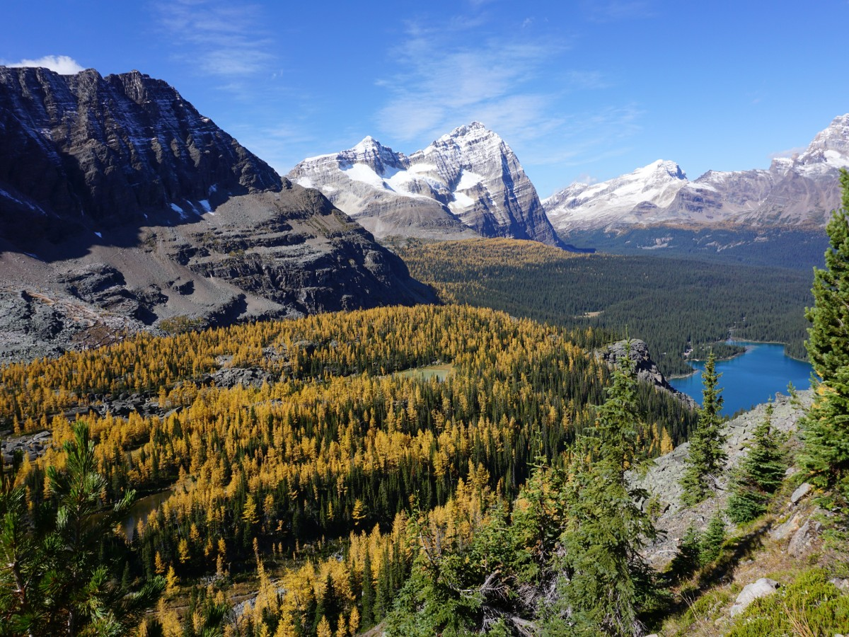 Scenery of the Lake O'Hara All Souls Route Hike in Yoho National Park, Canada