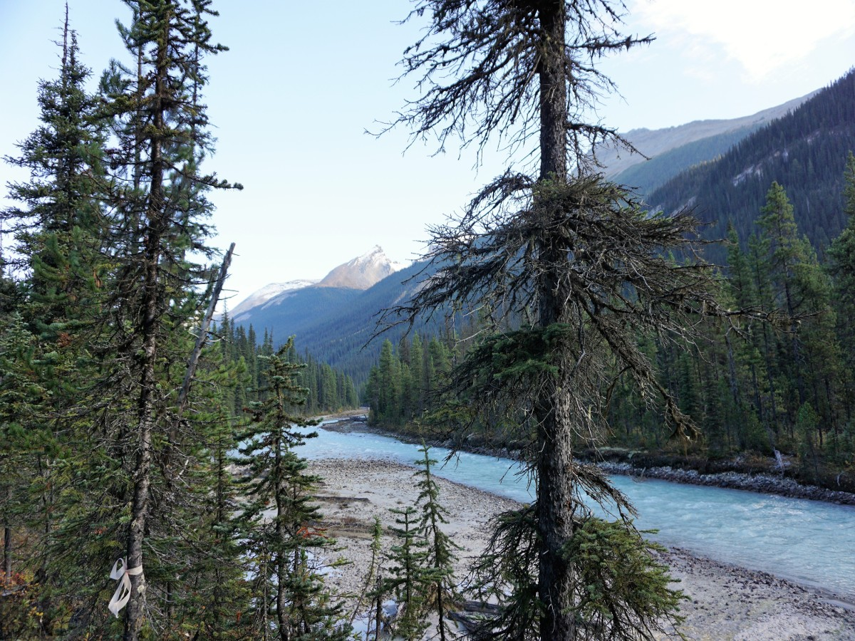 Hiking along the river on the Yoho Valley Circuit Hike in Yoho National Park, Canada