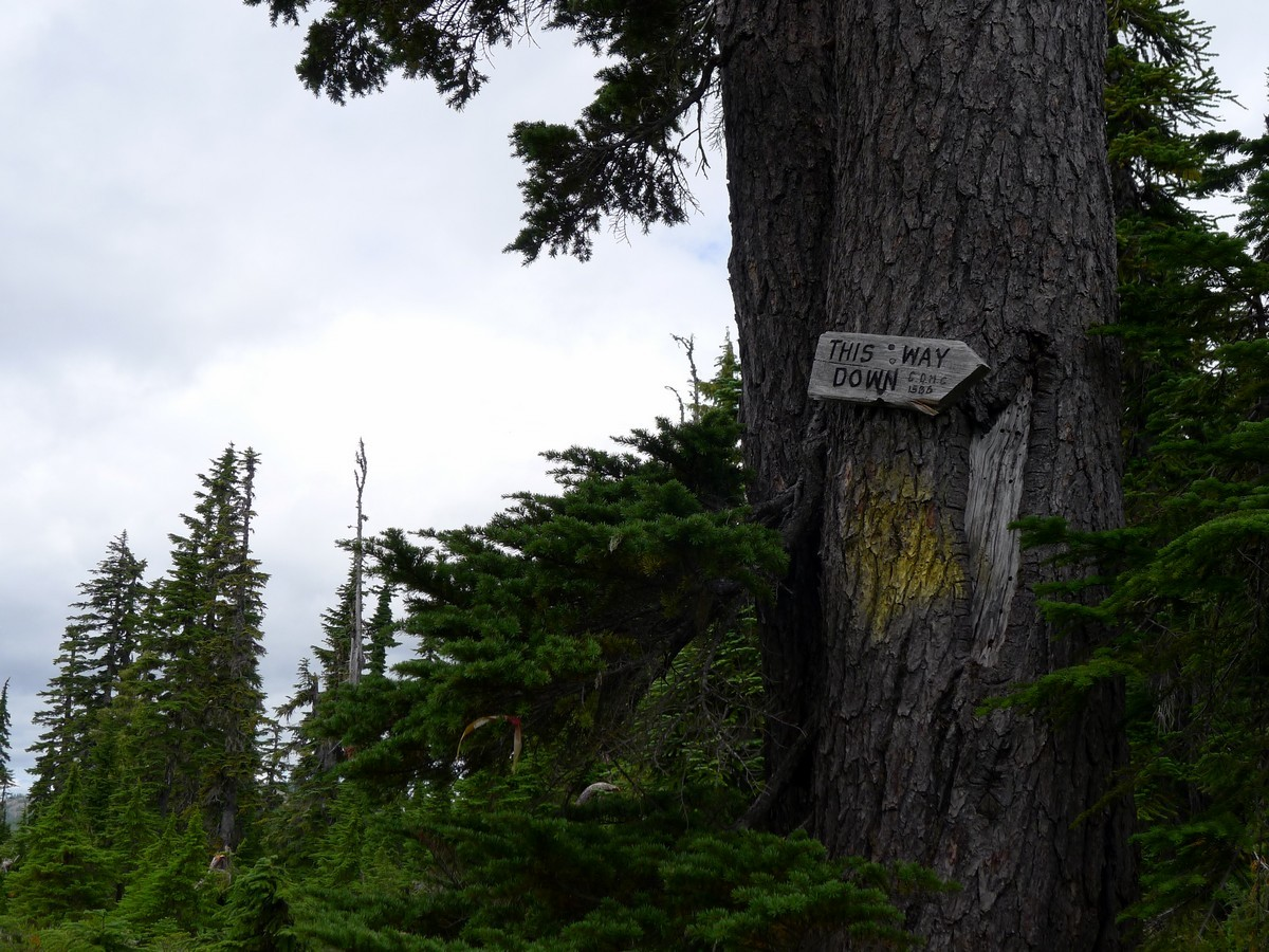 Way down on the Mt Becher Hike in Strathcona Provincial Park, Canada