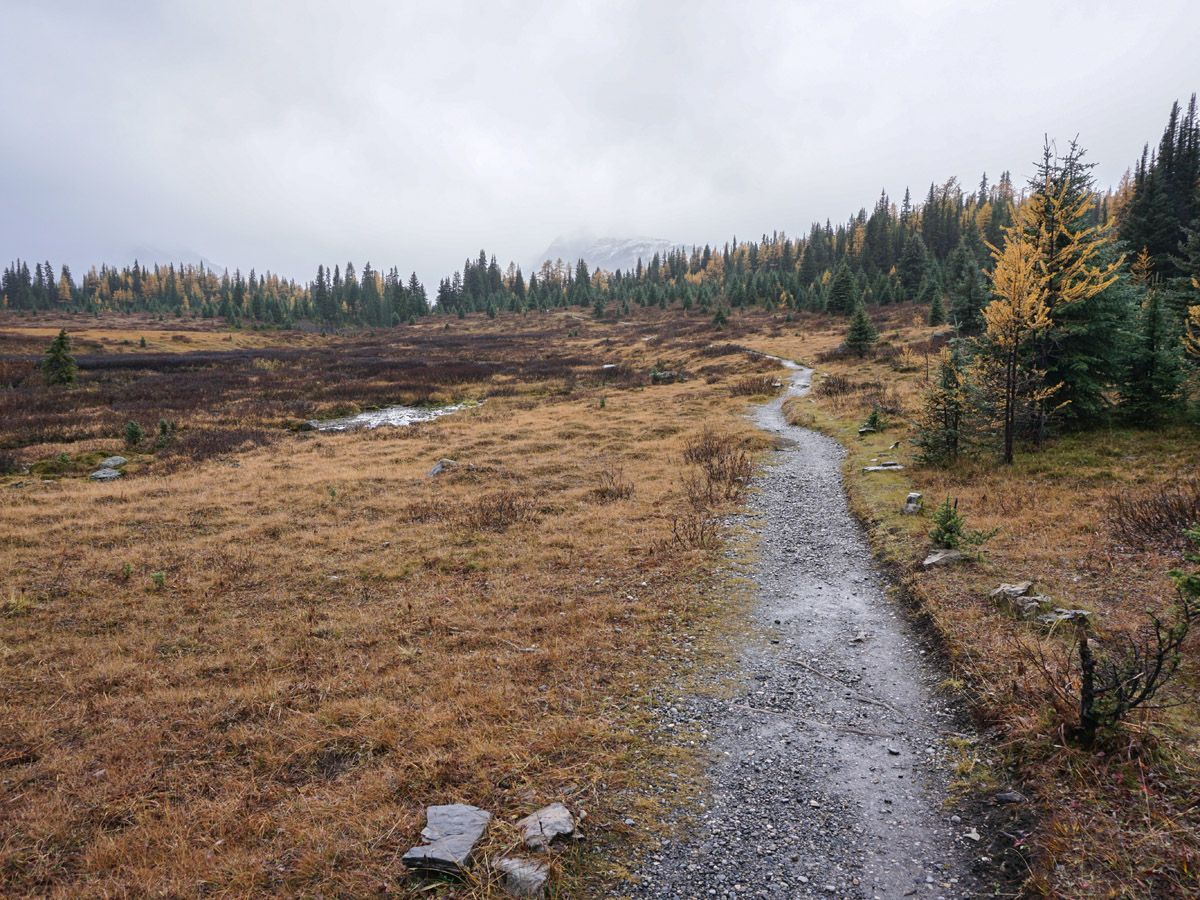 Chester Lake Hike on Smith-Dorrien Trail in Kananaskis leads through the meadow
