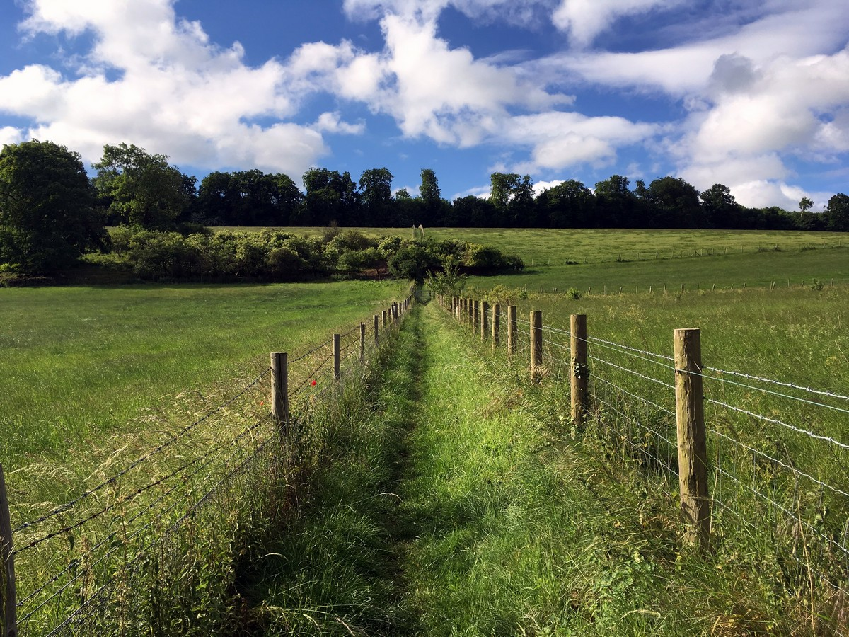 View of high wood on the Hurley Loop Hike in Chiltern Hills, England