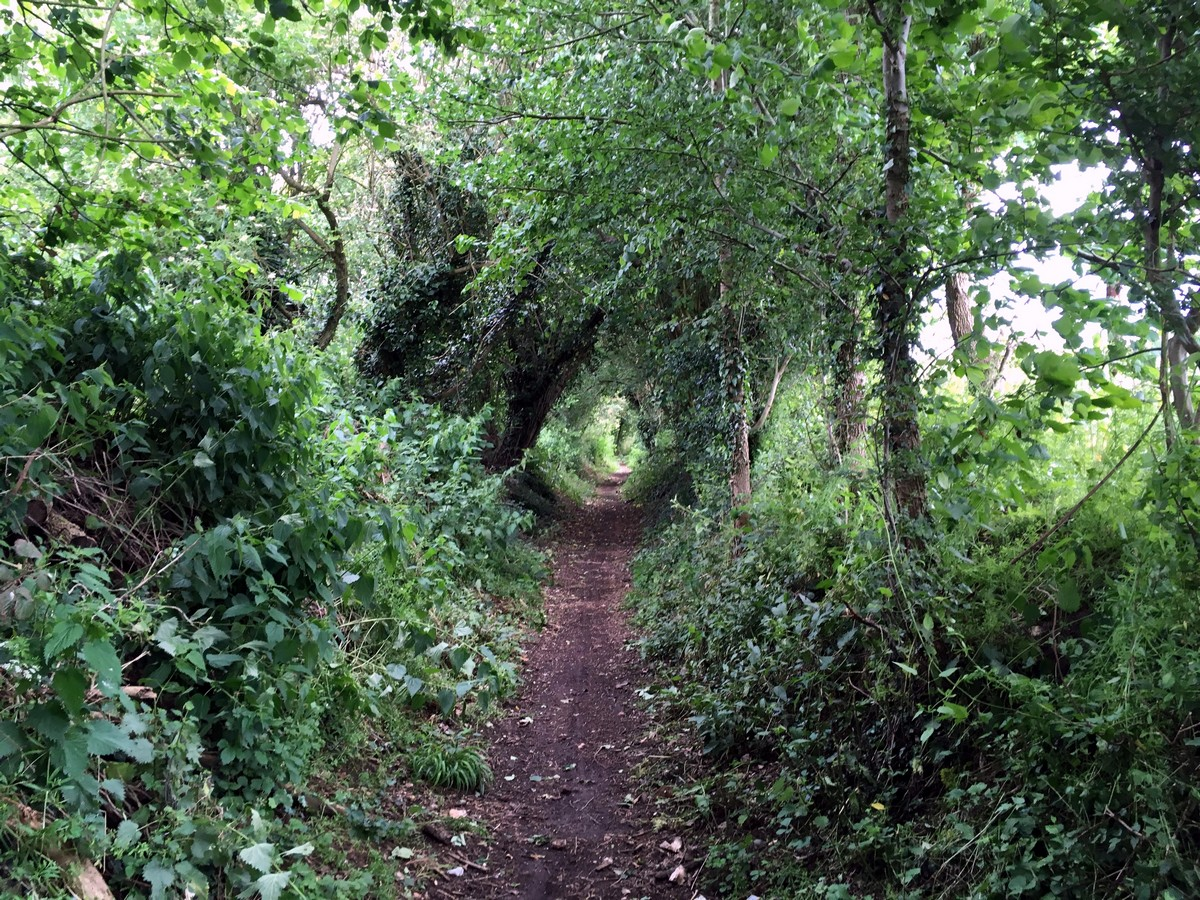 Knowl Hill Bridleway on the Hurley Loop Hike in Chiltern Hills, England