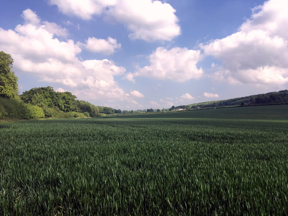 Crop fields near dirty wood farm on the Brush Hill & White Leaf Nature Reserve Hike in Chiltern Hills, England
