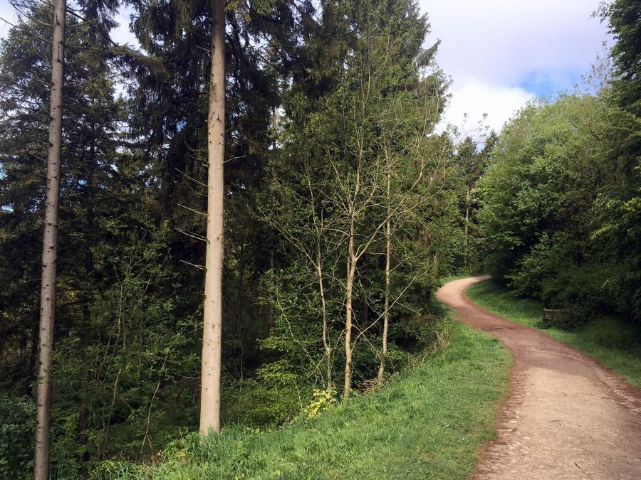 Along The Firecrest Trail