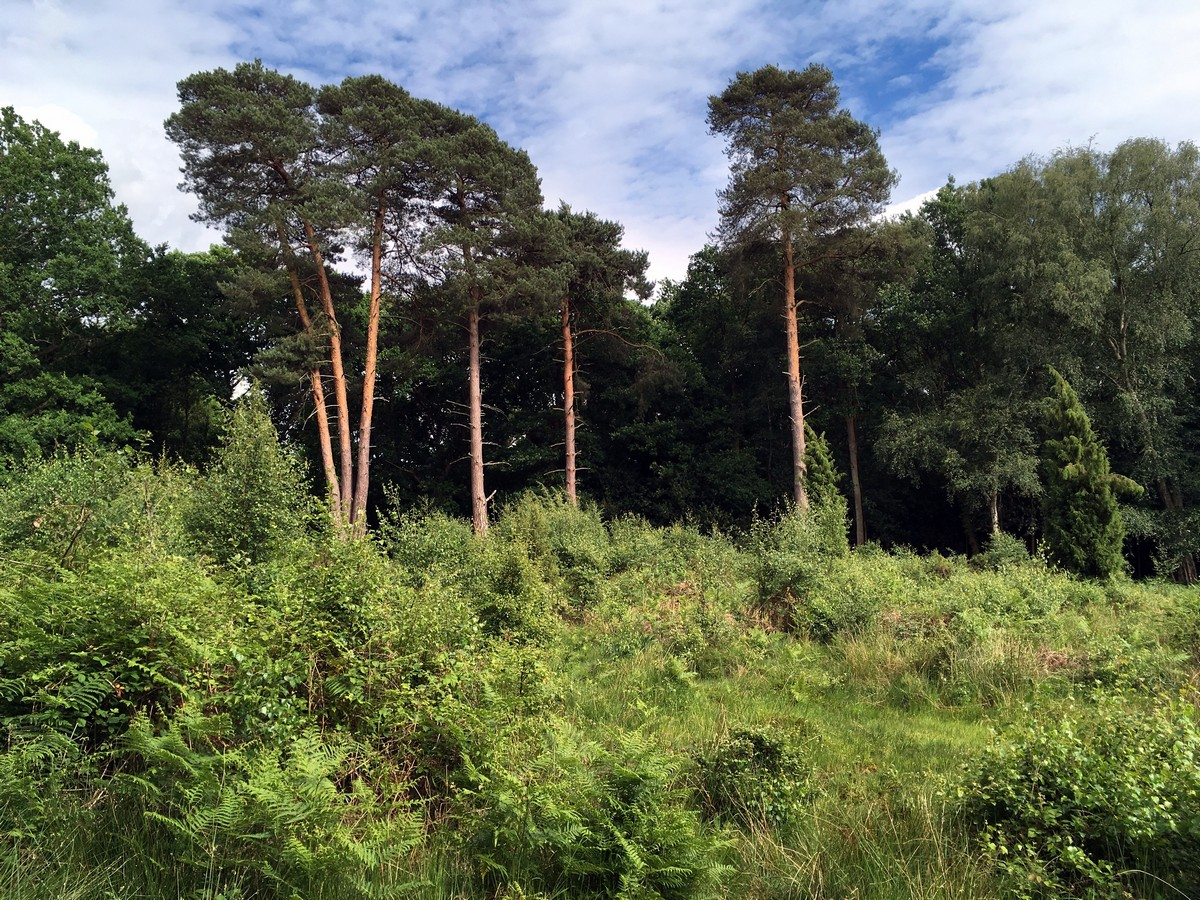 Views of the Burnham Beeches Loop Trail Hike in Chiltern Hills, England