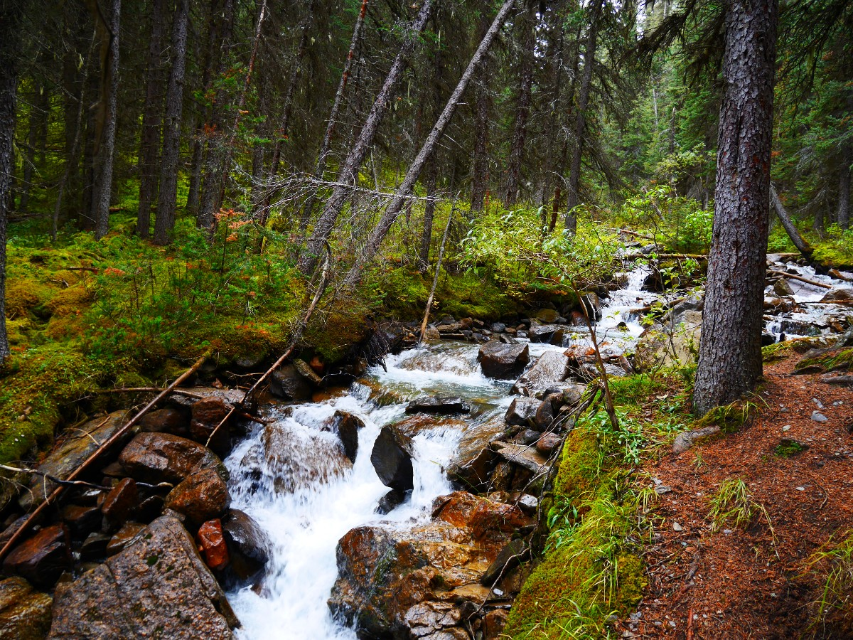 Creek on the Cirque & Chephren Lakes Hike from the Icefields Parkway near Banff National Park