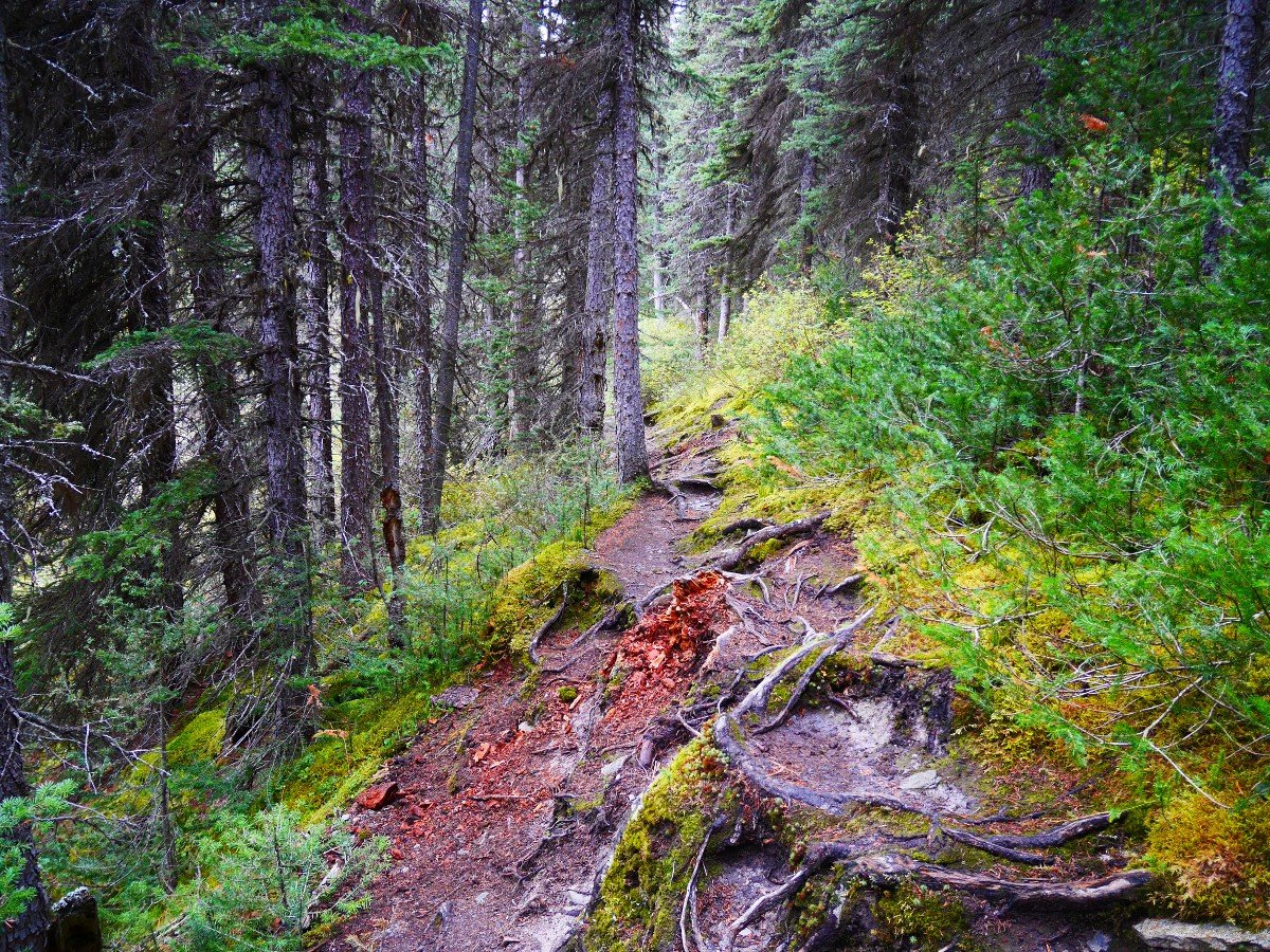 Rough part of the trail on the Cirque & Chephren Lakes Hike from the Icefields Parkway near Banff National Park