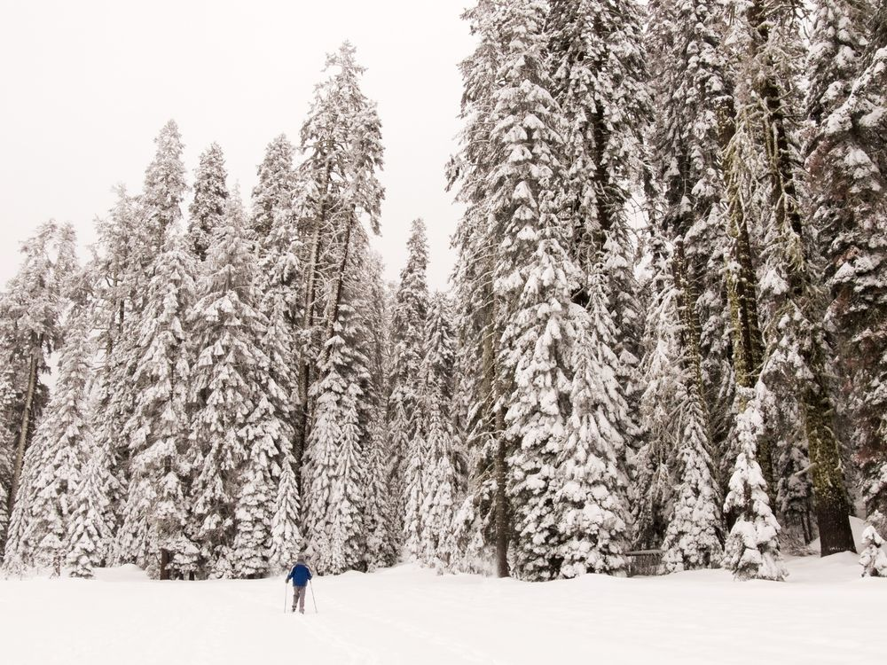 Cross Country Skiing near Badger Pass