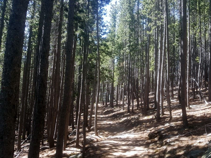 Trail through the forest on the Elk Meadow Park Hike near Denver, Colorado