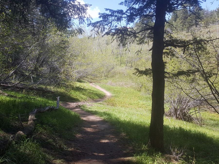 Meadow on the Enchanted Forest Trail Hike near Denver, Colorado