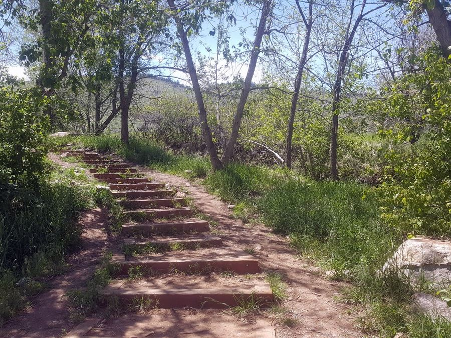 Stairs on the Enchanted Forest Trail Hike near Denver, Colorado