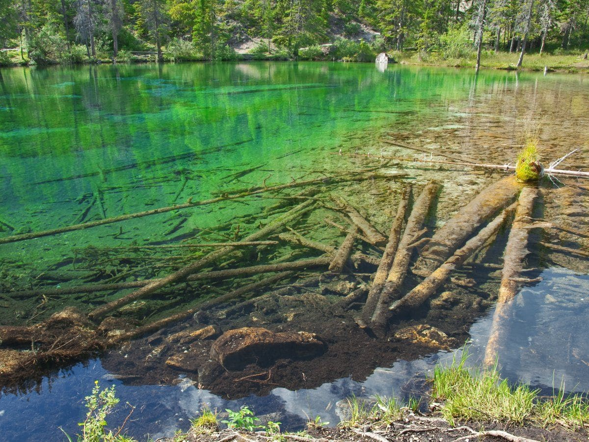 Fallen logs on the Grassi Lakes Circuit Hike in Canmore, the Canadian Rockies