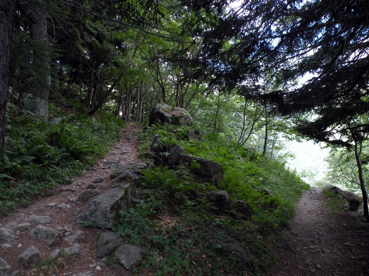 The path in the larch forest on the Lagarot di Lourousa Hike in Alpi Marittime National Park, Italy