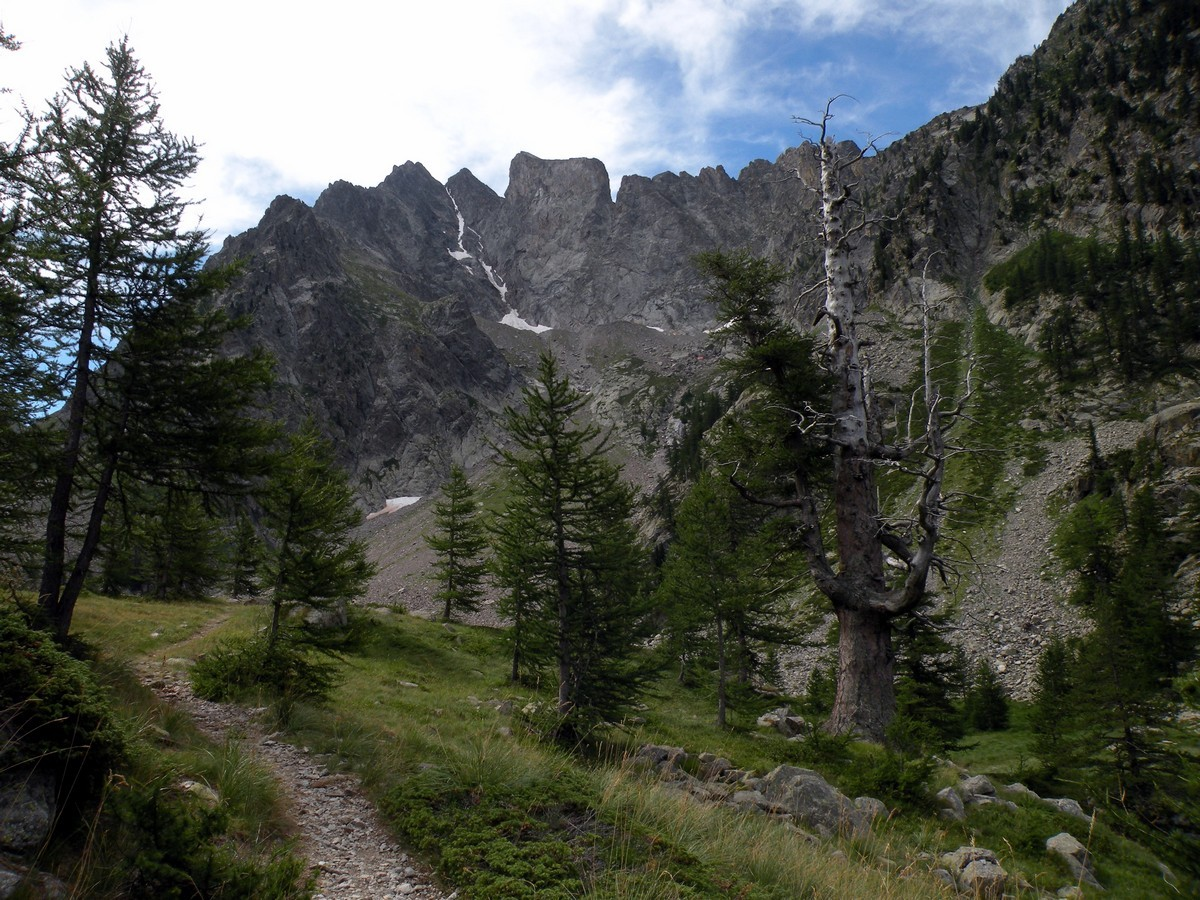 Old larches on the Lagarot di Lourousa Hike in Alpi Marittime National Park, Italy