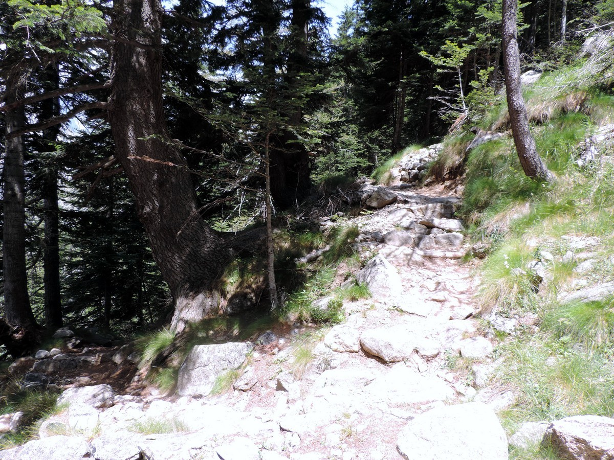 The path in the forest on the Vallone Argentera Hike in Alpi Marittime National Park, Italy