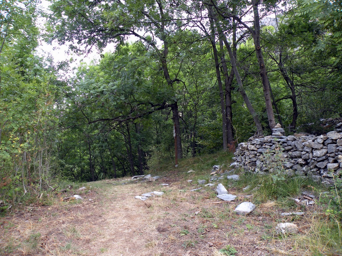 Gorge Della Reina Hike in Alpi Marittime National Park leads through the forest
