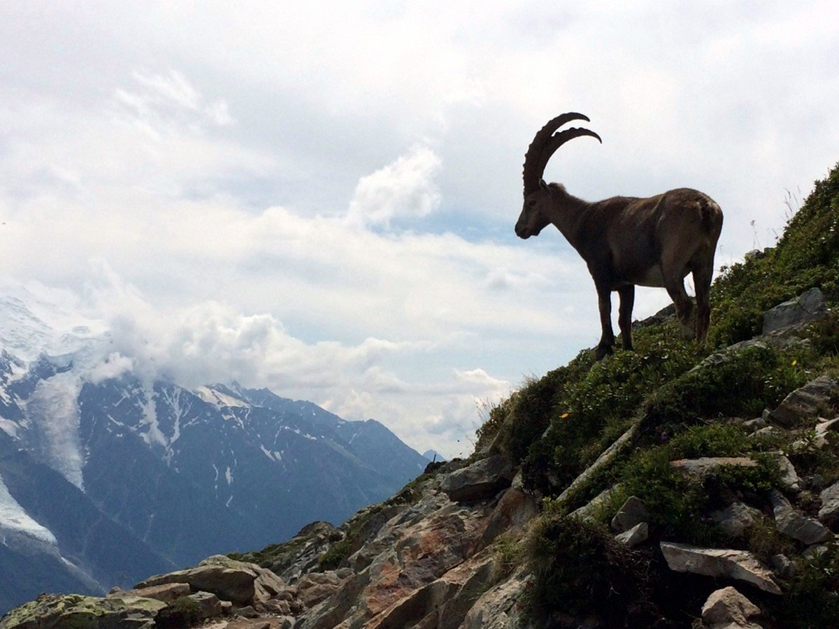 Hiking to the Lac Blanc from Chamonix