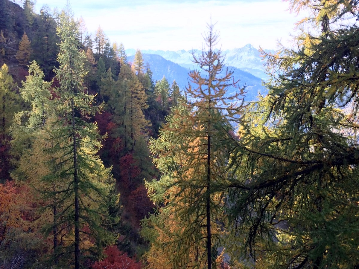 La Jonction trail in Chamonix during the autumn