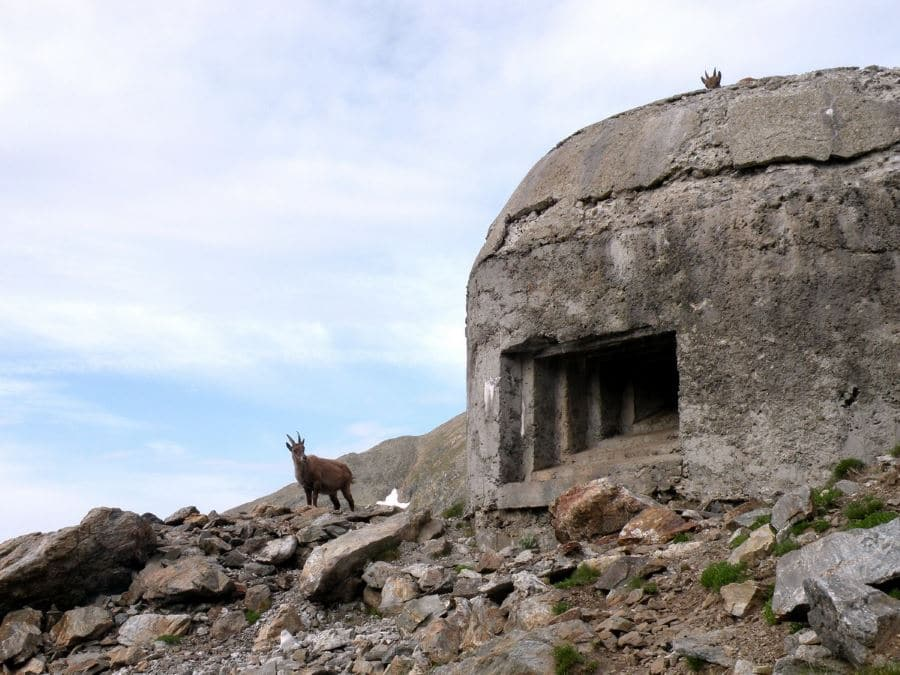 Bunker and ibex on the Col de Fenêtre Hike in Mercantour National Park, France