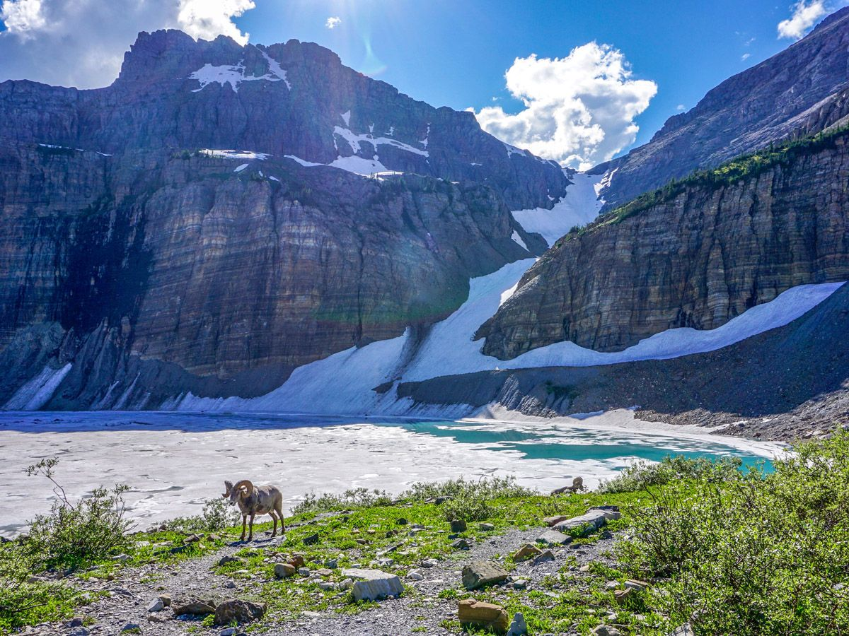 Fauna on Grinnell Glacier Trail in Glacier National Park, Montana