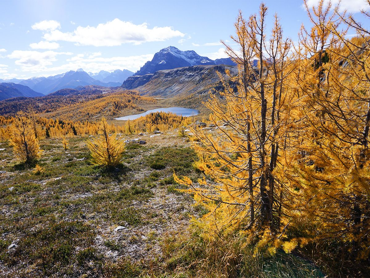 Trees along the trail on Healy Pass Hike in Banff National Park