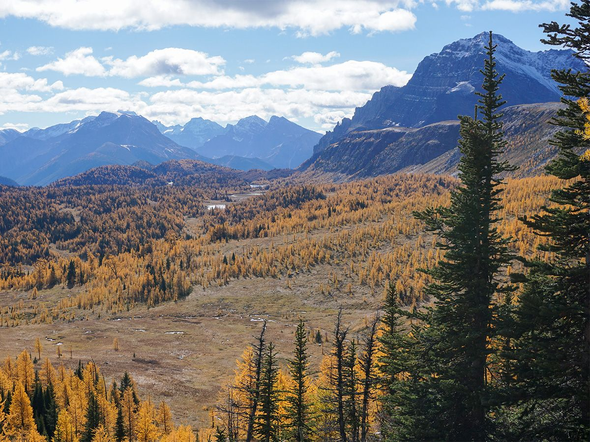 Landscape at Healy Pass Hike in Banff National Park