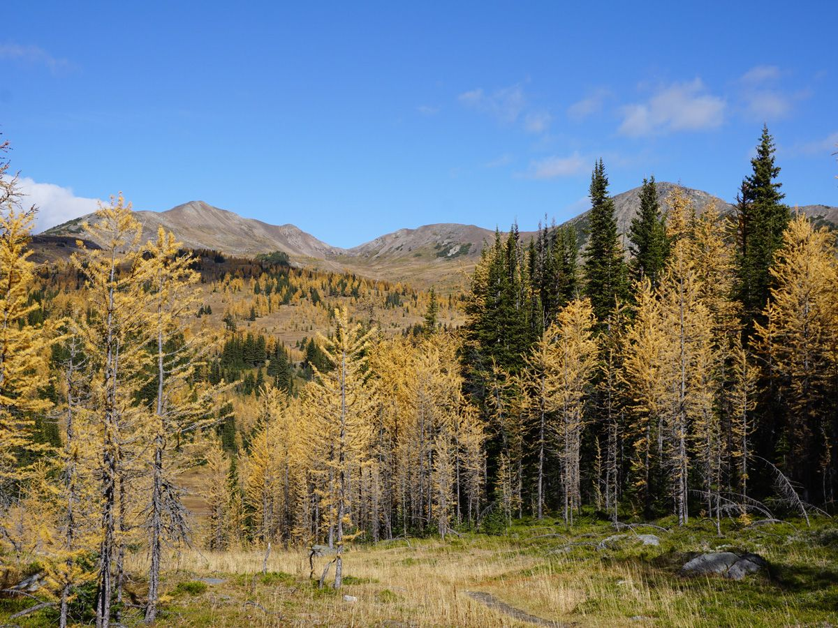 Trees and mountains at Healy Pass Hike in Banff National Park