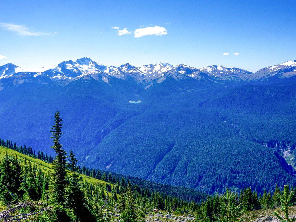 View of the forest from the top of the mountain at High Note Trail Hike in Whistler
